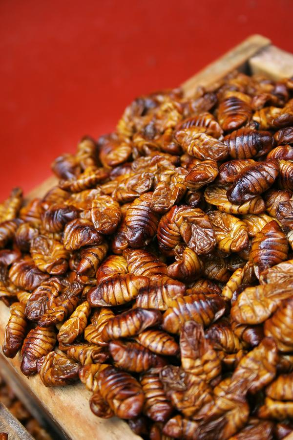 silkwormpupae