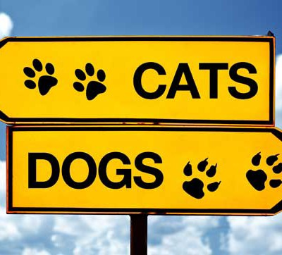 Teaching Style: Are you a Cat or Dog?