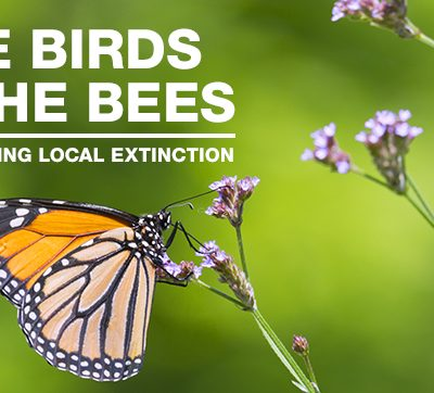 The Birds & The Bees: Preventing Local Extinction