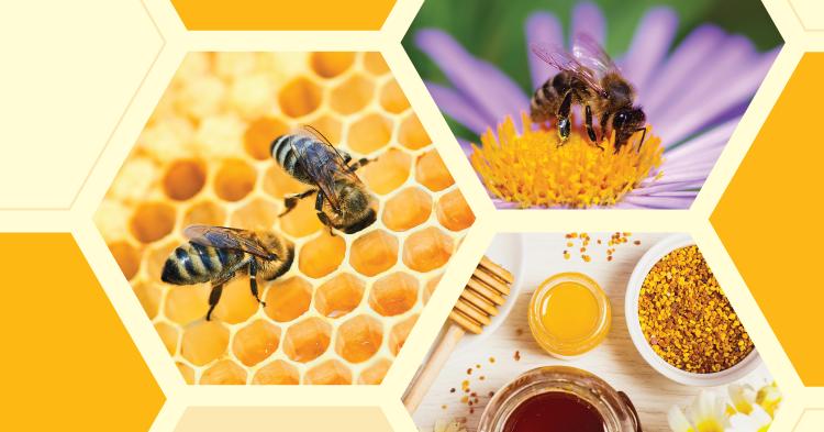 Virtual Field Trips: Honey Bees