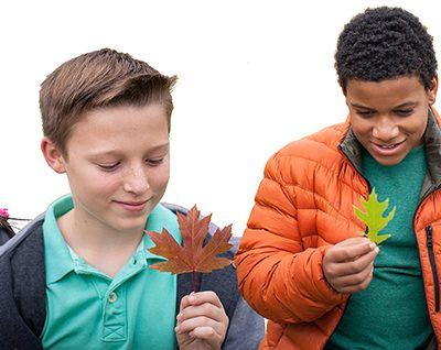 Take Students Outside with a Free Guide to Teaching About Forests